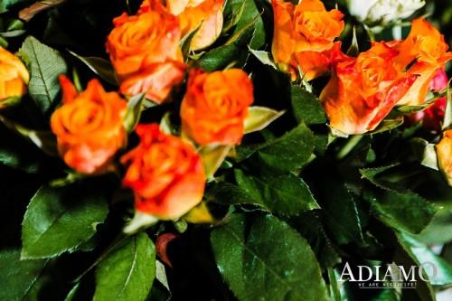 Adiamo-14_02_20_0009